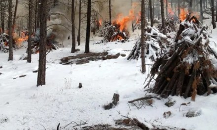 Controlled Burns in Hualapai's