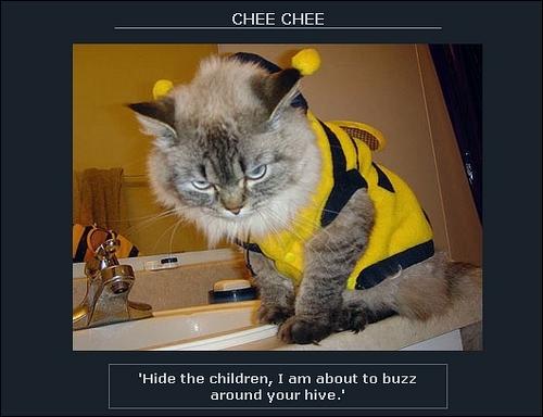 Catbee_1