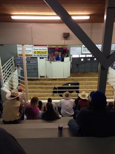 What an average animal sale looks like.