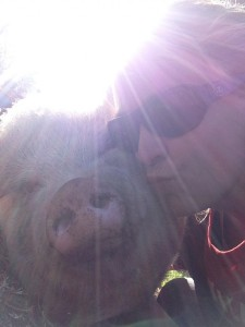 Pig kisses are the best.