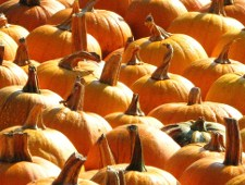 Pumpkin beer – it's not the fault of the pumpkin