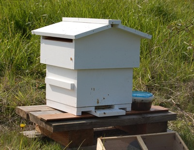 First Warre Hive in Colorado