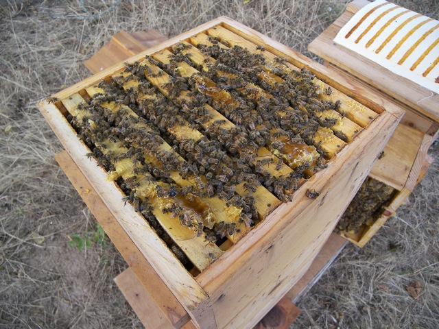 Warre Hive with Top Box Removed