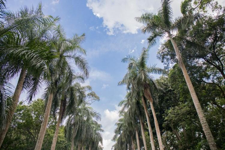 Palm Avenue in the Royal Botanical Gardens (Peradeniya Park), Kandy, Sri Lanka. Photographed by Shika Finnemore - thebellephant.com