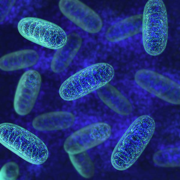 How to Optimize Your Mitochondria for A Healthier Brain