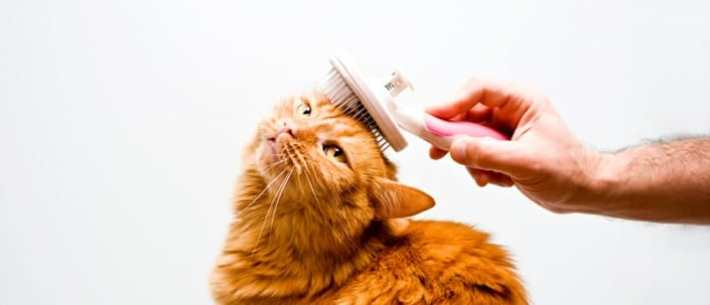 Foods That Help Cat Skin And Fur