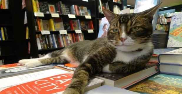 Tiny the Usurper, the feline mascot of Community Bookstore, is back at the store after he went missing for nearly a day.