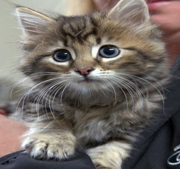 """""""You see how fast they grow. It's really amazing. I think kittens are more independent than puppies. And they're super-smart. And they all have different little personalities,"""" said Chapman."""