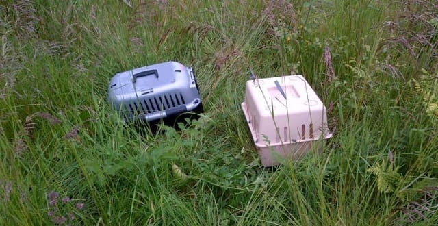Abandoned: The pet carriers dumped in woods where Molly was found.