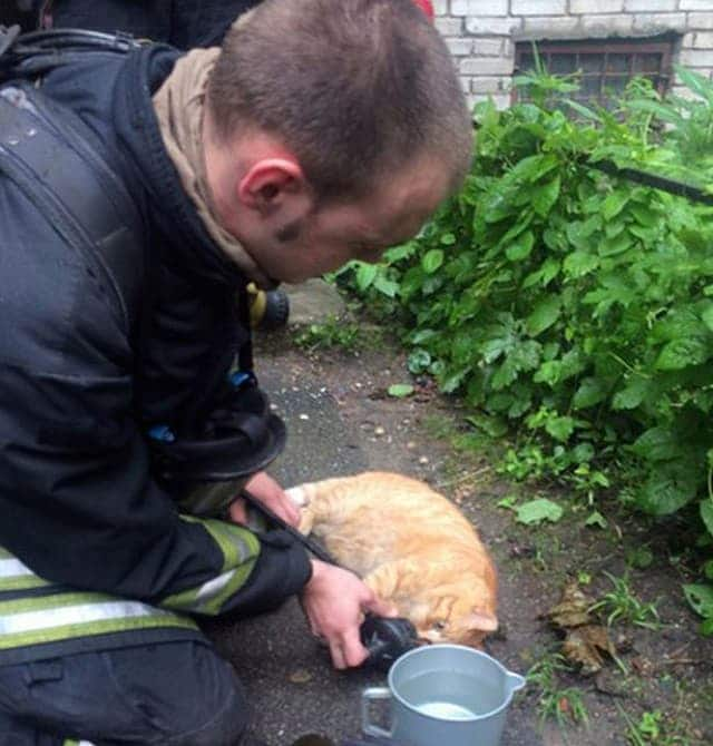 The tiny cat was saved thanks to the fireman sharing his oxygen