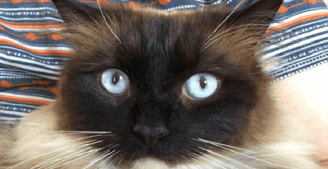 Cat Ykiyo, who was found dead, was probably another victim of the Croydon Cat Killer
