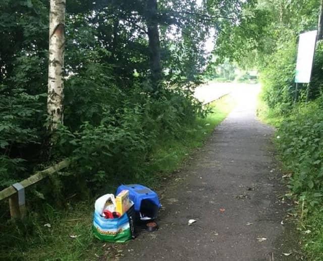 Cat left abandoned in Chadderton
