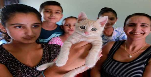 Simba, the orphaned cat from Lebanon, is held by Noor Ibrahim, 13, left, after the kitten was adopted by the Machhour-Ibrahim family and flown across the world to live in Forest Glade, Monday August 29, 2016. Joining Noor were siblings, Nader, 11, Lena, 7, Zena, 12, and their mother Nada Machhour, right.