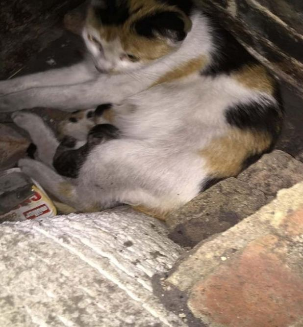 Sooty and sweet: Binky got stuck behind the fireplace with her kittens (LFB)
