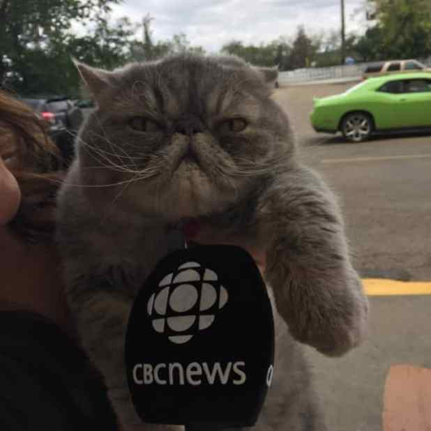 Winston the cat is a bit of a celebrity. He stars in a City of Edmonton ad campaign. (Roberta Bell/CBC)