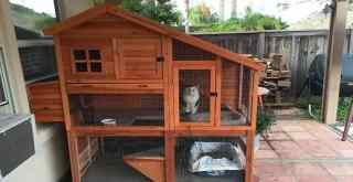 Woman Bought Her Kitties A Chicken Coop ... And They Love It!