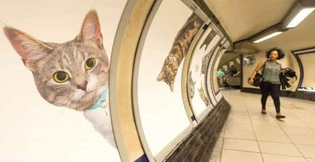 Clapham Common station right now (Picture: CATS)