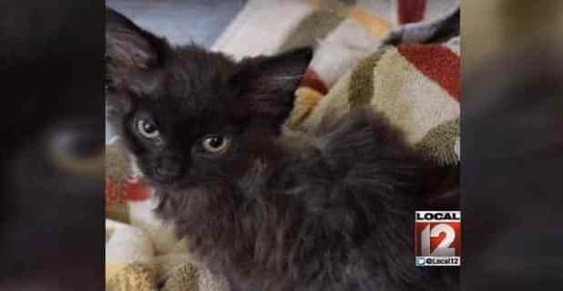 5-week-old kitten set on fire (Joseph's Legacy