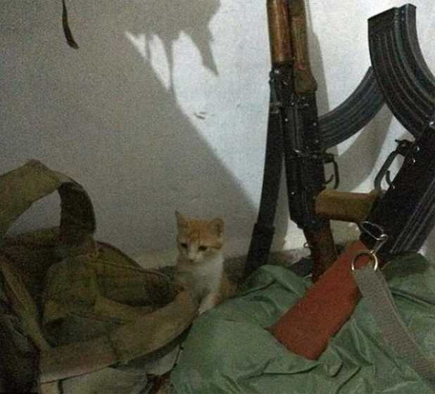 Sometimes the cats are surrounded by guns and grenades (Picture: Twitter)