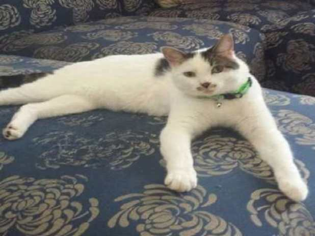 Driver is almost 100 percent recovered and has been adopted after having boiling water poured on him. (Credit: Felines & Canines)