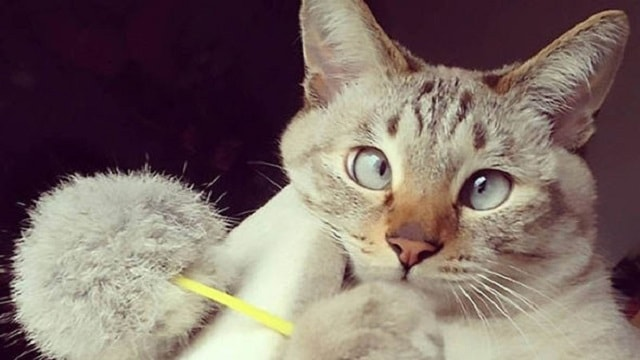 This adorable cat has won the hearts of millions online thanks to his eyes