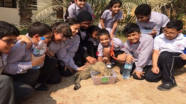 Children from Al Rabeeh School visit a street cat feeding station set up by volunteers from Animal Welfare Abu Dhabi. Courtesy Dr Susan Aylott