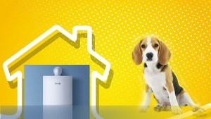 homemade dog house heater