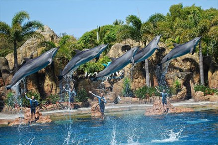 mainimage-seaworld2