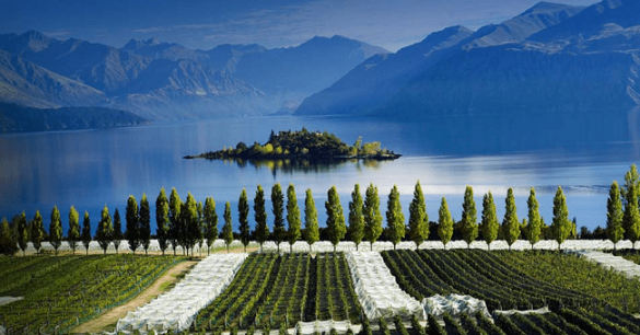 Central-Otago-Pinot-Noir-8.png