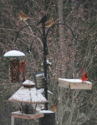 cardinals1s