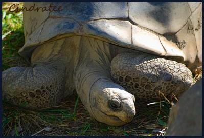 tortoise_2008 framed