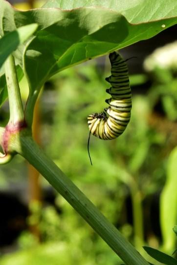 Vicki butterfly 4