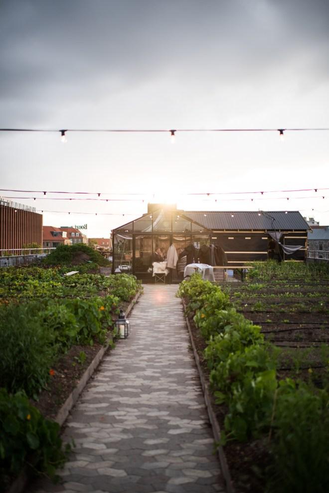 Stedsans Copenhagen Farm to Table Restaurant The Better Places