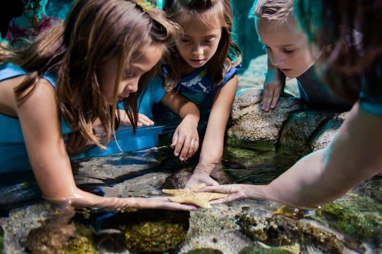 Rock Pool at Melbourne Aquarium