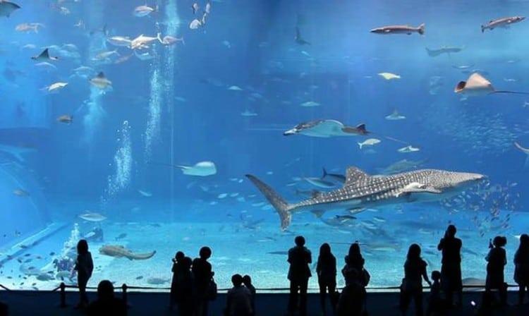 Inside Barcelona Aquarium