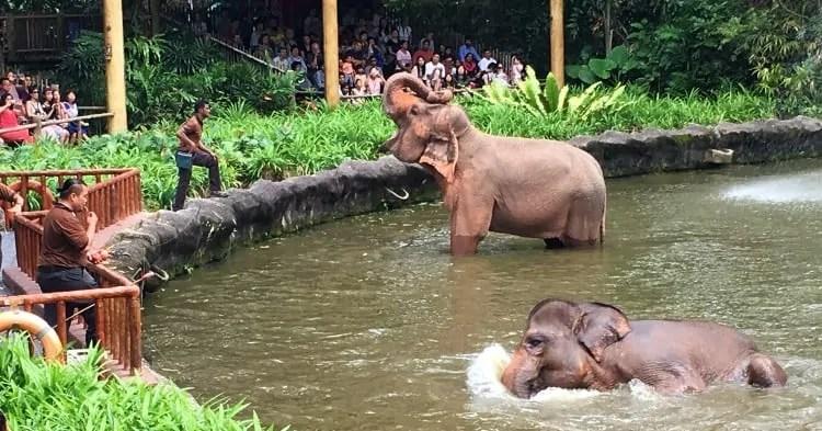 Elephant Presentation at Singapore Zoo