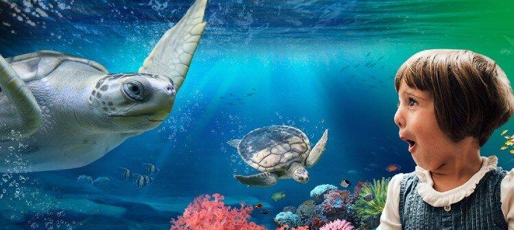Visiting Melbourne Aquarium