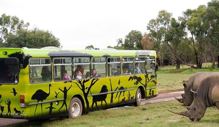 Junior Safari at Werribee Zoo