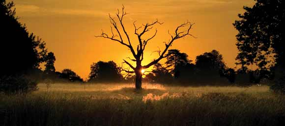 Kevin-Day-Sunlit-Tree