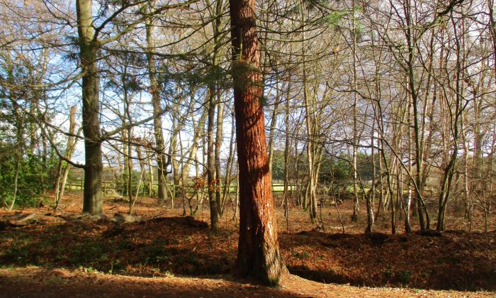 cropped-TREE-2.jpg