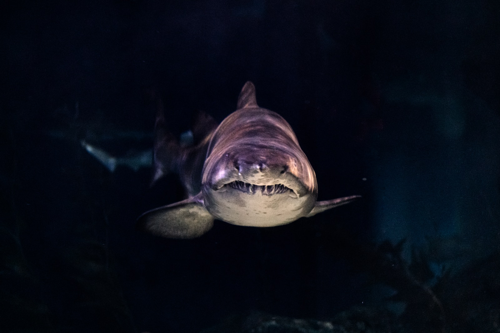 Don't Go Hurting Sharks' Feelings, Now