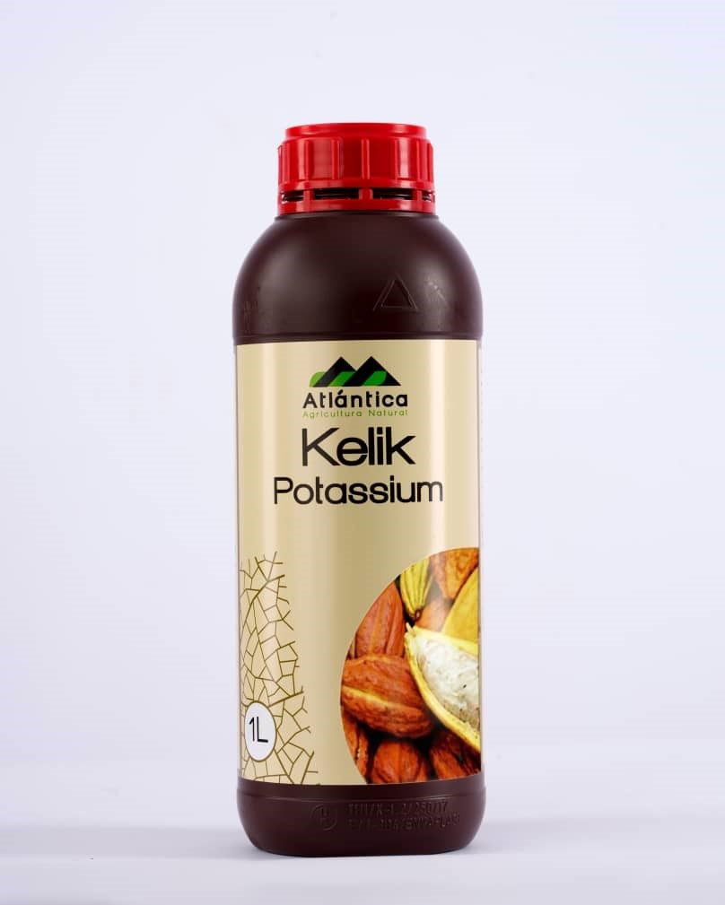 Kelik Potassium, new cocoa foliar fertilizer to increase weight and volume of beans launched