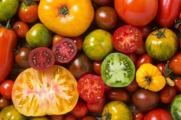 Let's go farming: Growing tomatoes, tips for a healthy and fruitful plant