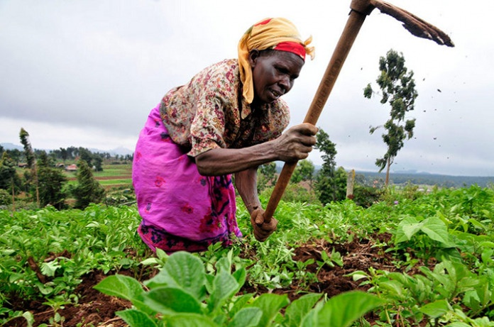 THE UN FOOD SYSTEMS SUMMIT: Ghana's plans for improved, resilient food systems