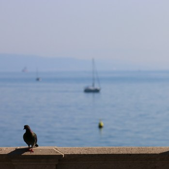 Bird on wall (with boats)