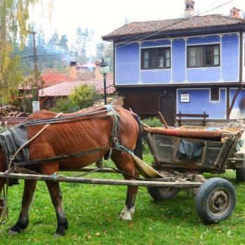 House & horse.