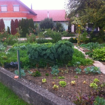 One of many garden allotments, allowing families to be self-sufficient in fruit/veg.
