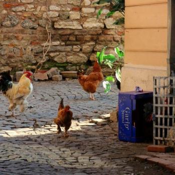 Backstreet poultry.