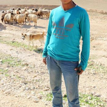 Meet Errol Flynn tending a flock of sheep in the Jordanian mountains.