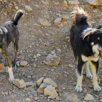 Man's best friend, sweet and welcoming as ever. Rescued by shepherds for the third time this trip.
